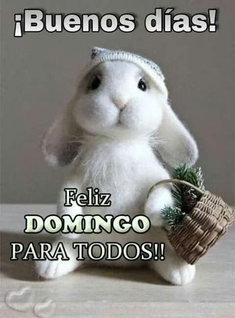 Feliz Domingo. - Página 15 Cda42be5b28b78200a5cab22a88e1d2d
