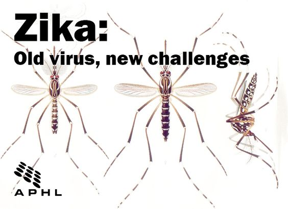 Zika: Old virus, new challenges | www.APHLblog.org
