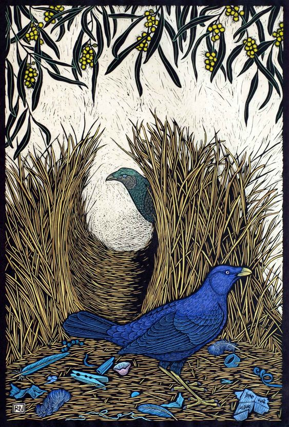 SATIN BOWERBIRD 74 X 50 CM   EDITION OF 50 HAND COLOURED LINOCUT ON HANDMADE JAPANESE PAPER $1,550