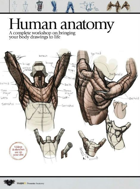 ImagineFX How to Draw and Paint Anatomy - EbooksArt.Com | How to Art Instruction | Painting Lessons | Tutorials