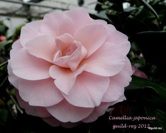 native japanese flowers | native japanese flowers