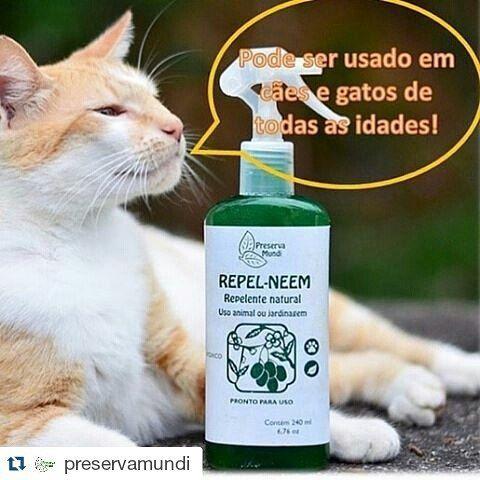 #Repost @preservamundi ・・・ O Repel Neem pode ser usado em cães e gatos de todas as idades pois não é tóxico!  O Repel Neem é natural, hipoalergênico, biodegradável e Cruelty Free  #neem #preservamundi #ondecomprar  Compre em nossa loja virtual e receba em casa >> www.natupoint.com.br >> Enviamos para todo o Brasil! @itakunha