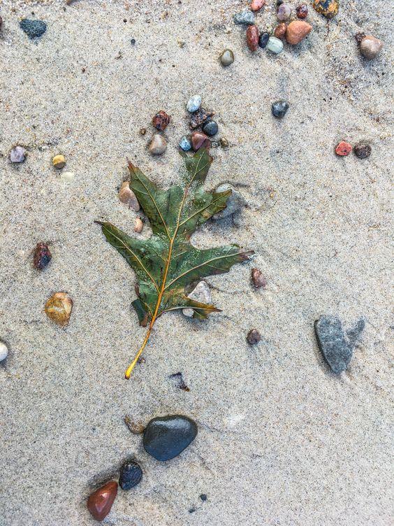 Мозаика, сложенная морем на пляже. Фото Жени Шведы