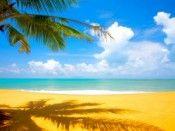 A Palm Tree on Tropical Beach