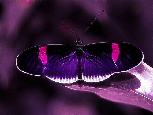 Flutter in purple