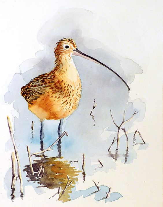 Painting of a Bird A Print of Watercolor by WatercolorByMuren- shore bird