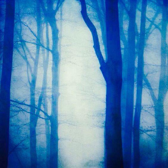 Het blauwe bos