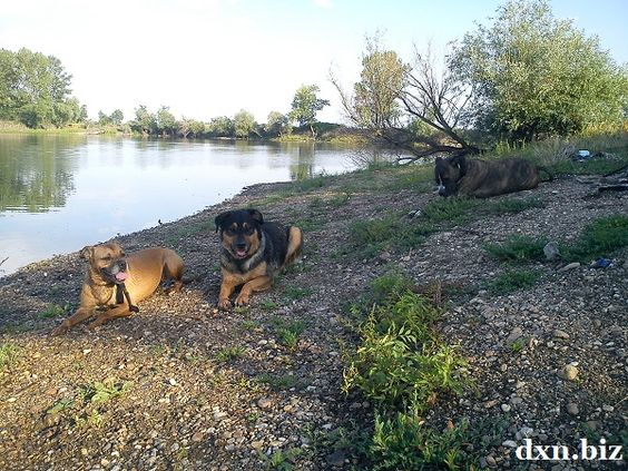 My dogs having a rest in summer at Lake Csorba, Miskolc, Hungary
