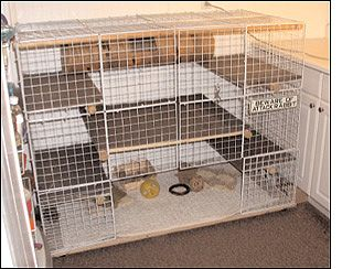 multi level bunny cage | ... made easier by placing a layer of cardboard in the bottom of the cage
