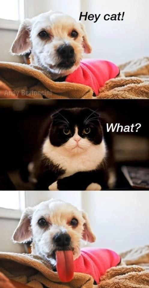 :): Funny Animals, Hey Cat, Funny Cat, Funny Picture, Funny Stuff, Cats And Dogs