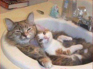 chats dans le lavabo