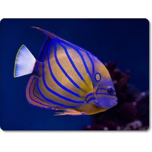 Bluering Angelfish Decor Plush Rug In 2020 Aquarium Fish Tropical Fish Saltwater Fish Tanks