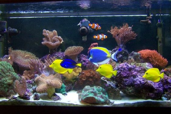 we would love a huge tank of beautiful saltwater fish. Black Bedroom Furniture Sets. Home Design Ideas