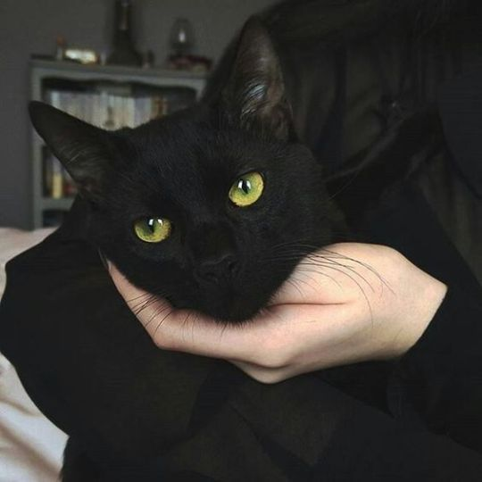 Black Cats With Green Eyes Black Green Cats And Kittens Black Cats Aesthetic Black Cats Marvel Black Cats Tattoo Black Cats D En 2020 Gatos Animales Mascotas