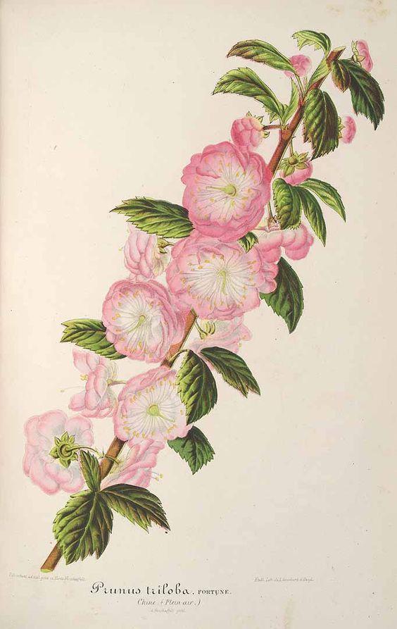 best gardenia perfumes Cafleurebon  Perfume and Beauty Blog