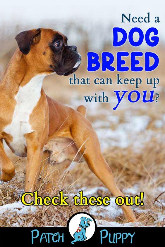 10 High Strung Dog Breeds Dog Breeds Dogs Small Dog Breeds