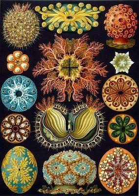 WikiMedia Commons scientific prints