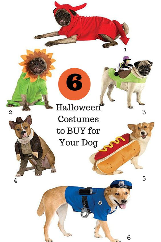 12 Costume Ideas for Your Dog | If It Barks Blog