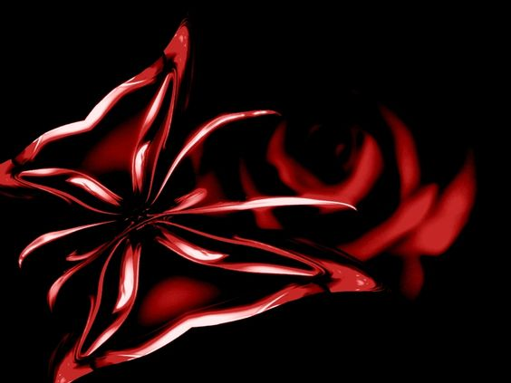 Black and Red Roses | ... , XP wallpaper, Red butterfly ...
