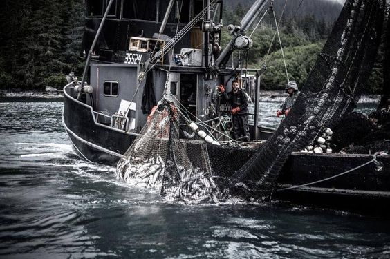 The Lopez Fisheries Team with another nice set in Prince William Sound 2014. Photo Credit-Thomas Lopez Real Clothing for Real Fisherman www.seafoodapparel.com