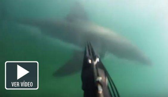Graba con una cámara submarina cómo le ataca un tiburón blanco