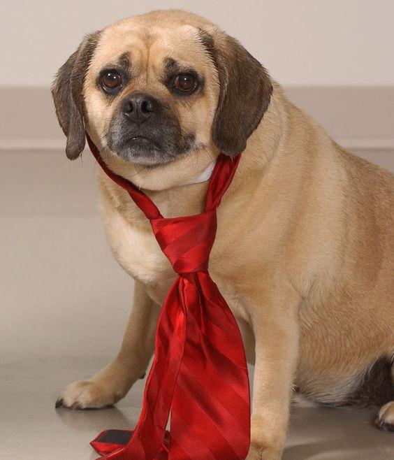 Adopt Vander Franklin County Dog Shelter 4340 Tamarack Blvd Columbus Oh 43229 Ph 614 525 3647 Shelter Dogs Dogs Adoption