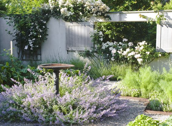 Ina 39 s nepeta one of her favorite plants in the garden parterre gardens pinterest zahrady - Ina garten garden ...