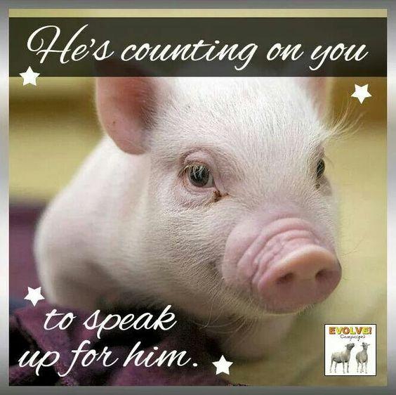 Piggy too cute to eat