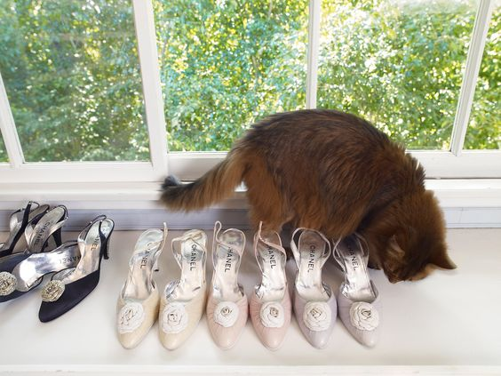 Taylor's cat Fang, roaming over her Chanel shoes.:
