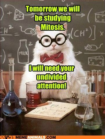 Chemistry Cat: Don't Make a Phase