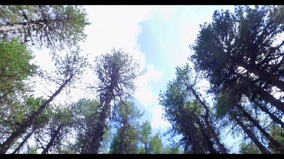 Cyprus Troodos Mountains Atalanti Nature Trail Part F - YouTube