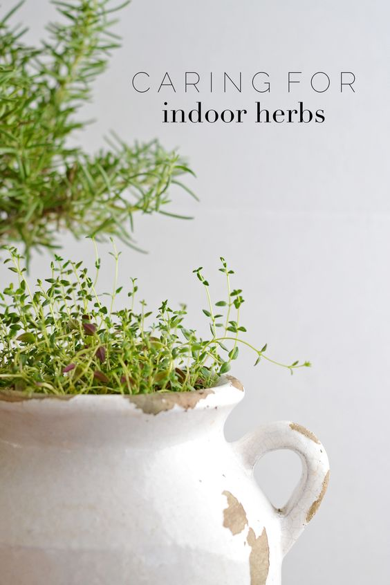 Tips For Keeping Indoor Herbs Alive (for Longer than a Month)
