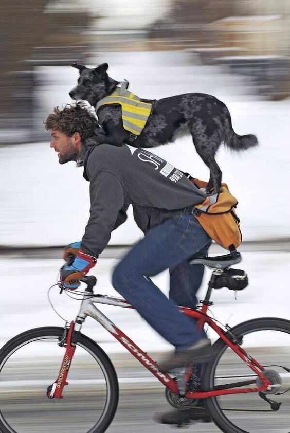 Cycling partners...I'd live to see this.. Mans best friend