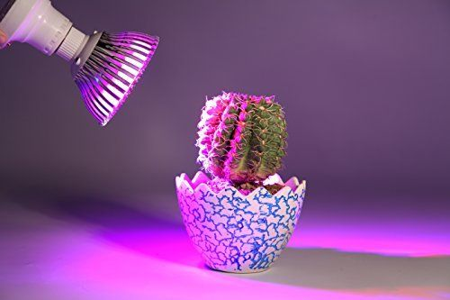 Light And Sun For Succulents And Cacti The Ultimate Guide In 2020 Led Grow Light Bulbs Grow Light Bulbs Plant Lighting