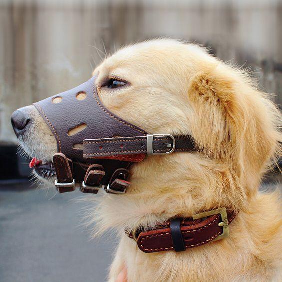Dog Muzzle Small Medium Large Anti Bite Anti Called Stop