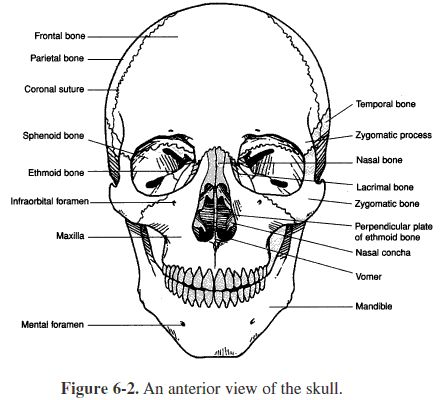 507156063 likewise Zimmer Natural Nail System furthermore 100315 202399 406042 additionally 70 furthermore Skeletal System. on skeleton key