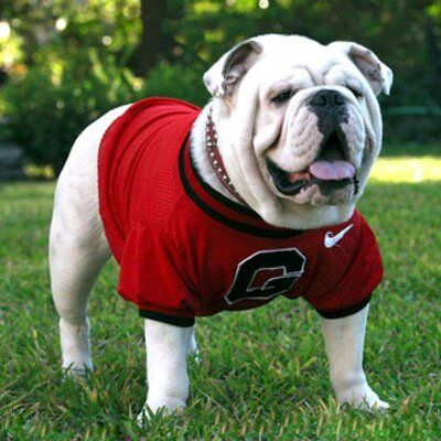 #Georgia loses a bunch at the point of attack, look to fade the depleted #Bulldogs on their upcoming College #Football Odds. Expert handicapper provides his analysis on #UGA hopes. http://www.sportsbookreview.com/picks/college-football/with-a-depleted-roster-look-to-fade-the-uga-bulldogs-season-win-totals/73821#utm_sguid=165879,0ecd7c16-a9a6-c458-5e49-35ffbbedfb67