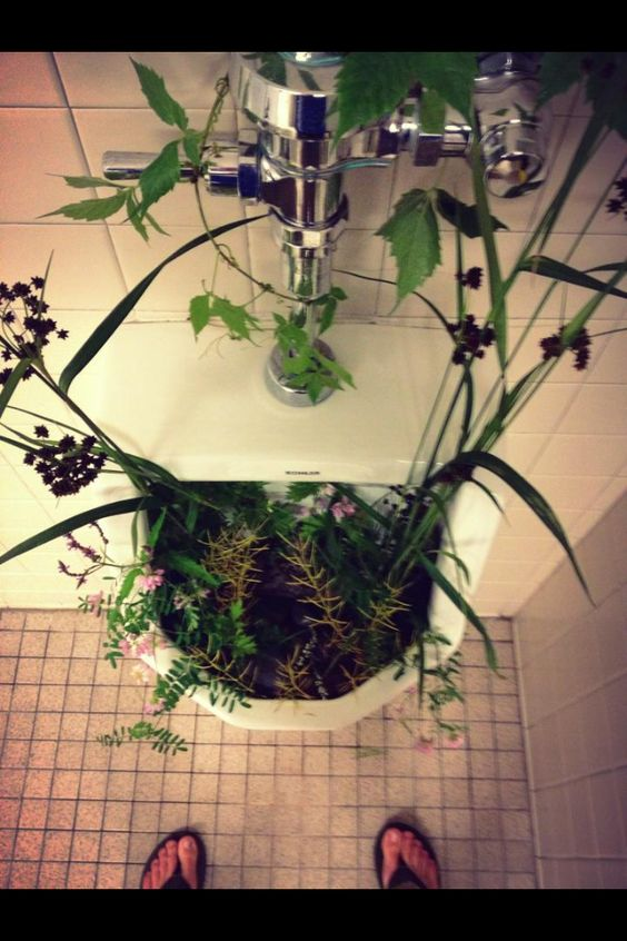 The new natural way to decorate your bathroom urinal.  Its all natural, even the aroma is pleasant.