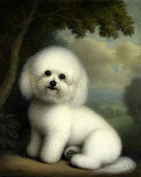 Seated Bichon Frise Dog Oil Painting: