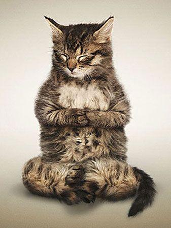 Pet Yoga : Photo by Dan Borris