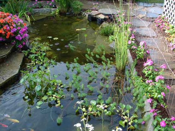 The edges of this pond are covered with rock on a roll and for Rock ponds designs