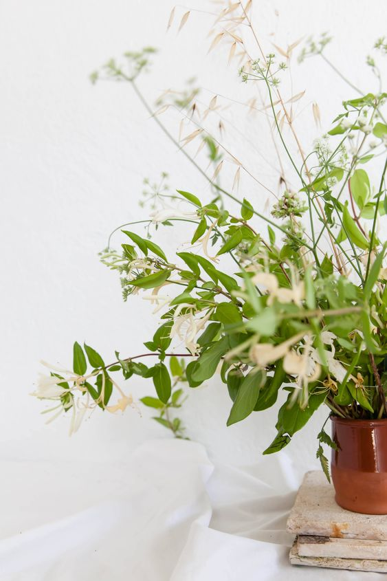 Rethinking Honeysuckle: Casual Vines for Charming Arrangements