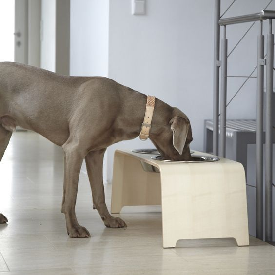 MiaCara dog bowl dogBar maple