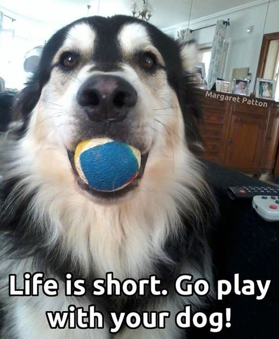 Letting the dog out does not equal play time! Find out why: