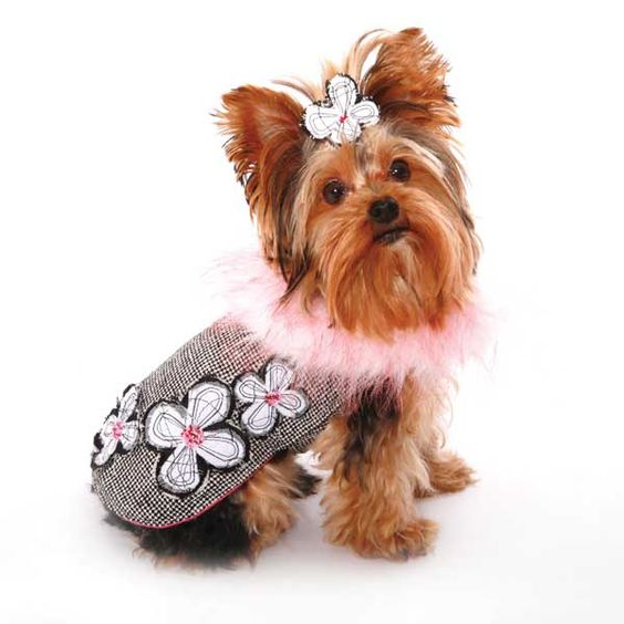 Designer Dog Coats For Small Dogs