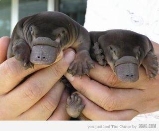 omg! so cute!