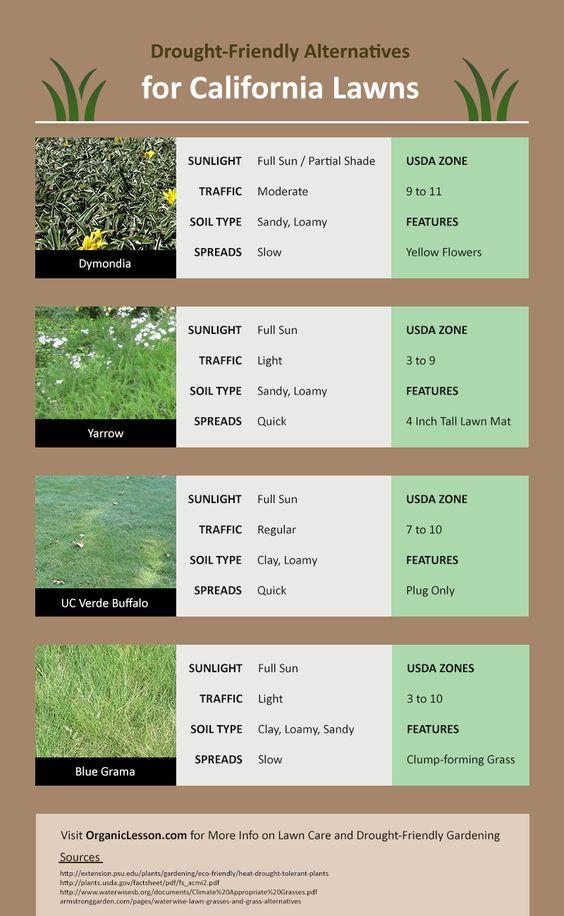 Drought Tolerant Lawn Alternatives Grass California