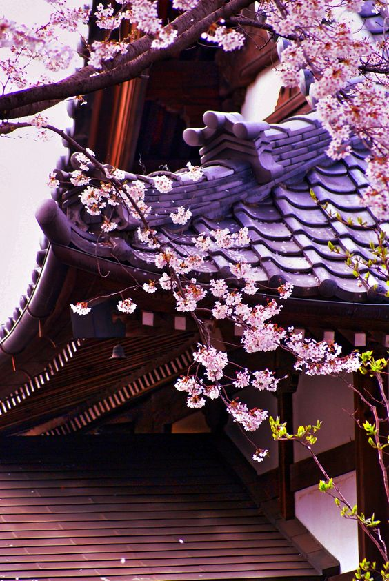 CHERRY BLOSSOMS........KYOTO...............SOURCE MAIHANAMI.TUMBLR.COM............
