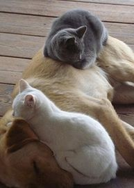 Pet Picture Of The Day 09 15 2014