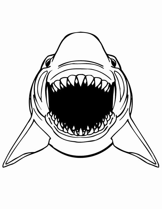Great White Shark Coloring Page Inspirational Great White Shark Scary And Free Printable Coloring P Shark Coloring Pages Animal Coloring Pages Shark Printables
